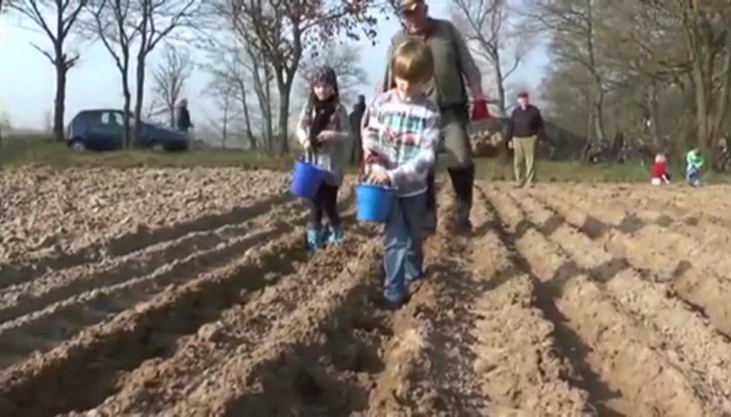 Kartoffelpflanzaktion in Dörpen
