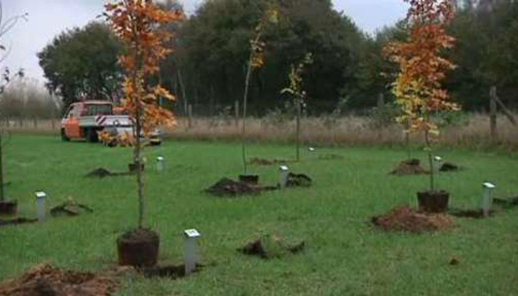 Emlichheimer Hochzeits- und Familienwald wächst