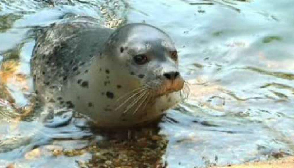 Nachwuchs bei Nordhorner Seehunden