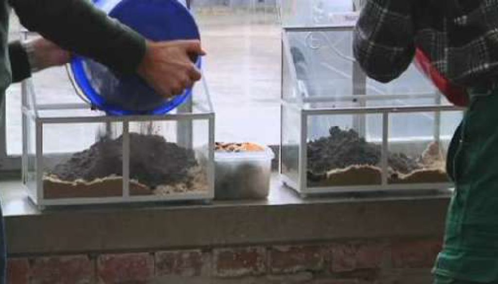 Der Gartentalk - Würmer in da House