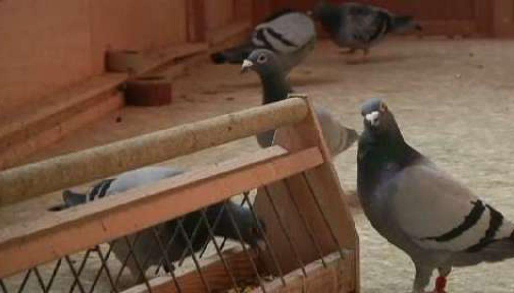 Taubenzüchter spenden 9000 Euro an Hof Blekker