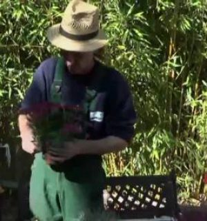 Peter als Alleinunterhalter in Sachen Herbstbepflanzung