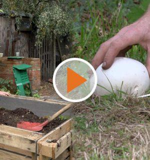 Screen_Zwischen Hochbeeten und Riesenpilzen