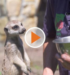 Screen_Die Tierzeit Juli 2020