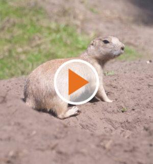 Screen_Tierzeit September