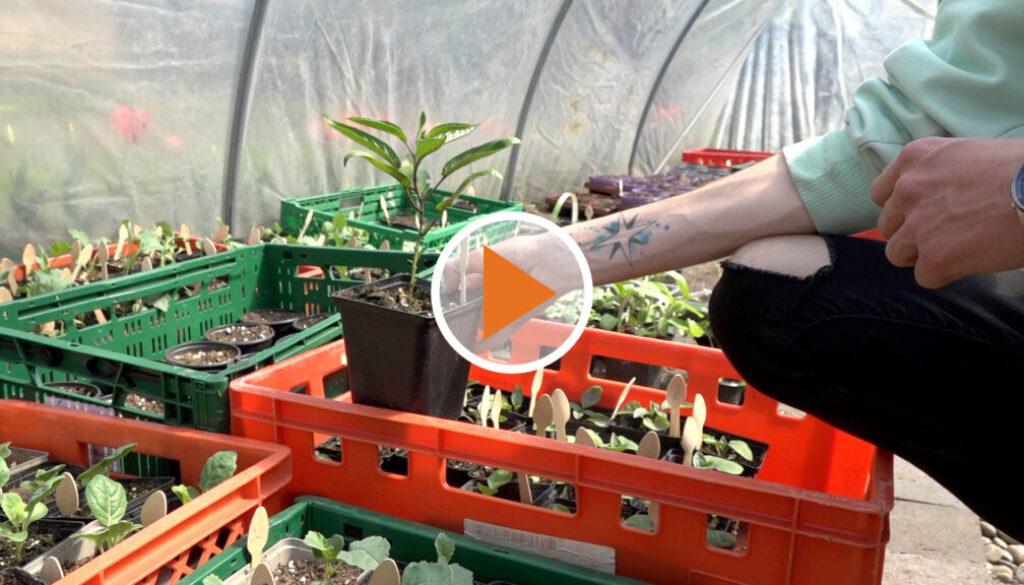 Screen_Felix Hobby Garten Jungpflanzenverkauf