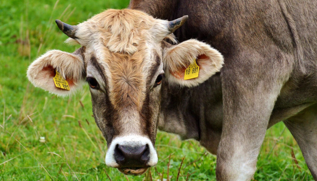 Screen_Agrarministerin untersagt Tiertransport