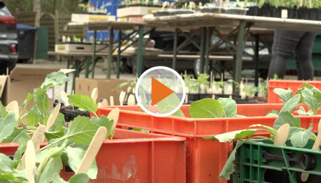 Screen_Jungpflanzenverkauf fuer das Tierheim Lingen