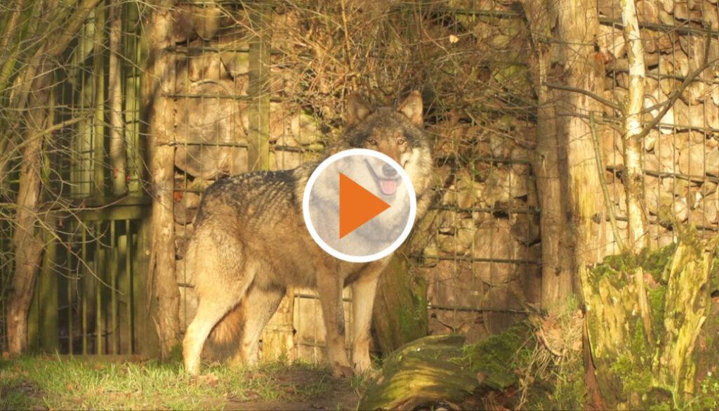 Screen_21 06 11 Petitionsübergabe zum Wippinger Wolf