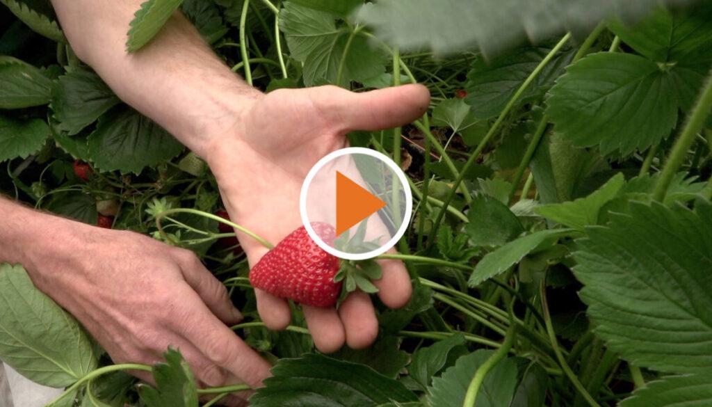 Screen_Verspaetete Erdbeerzeit