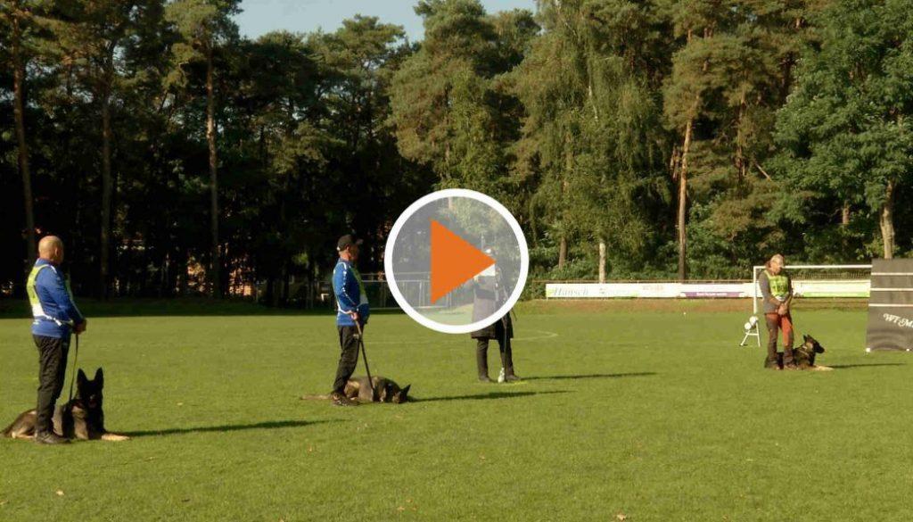 Screen_211008_Hundemeisterschaft